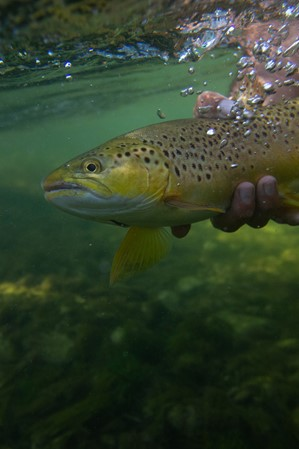 Flaming-Gorge_Fly-Fishing-Guide_Colby-Crossland_Jim-Urquhart-Photo_010603